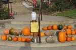 Last chance for pumpkins....